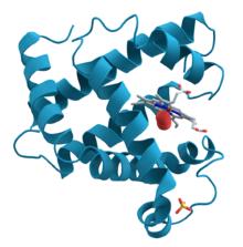 220px-Myoglobin